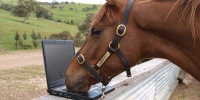 Marketing automation equine